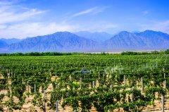 宁夏贺兰山东麓作为与法国波尔多同纬度的葡萄酒产区